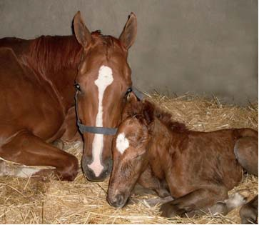 MARE_AND_FOAL